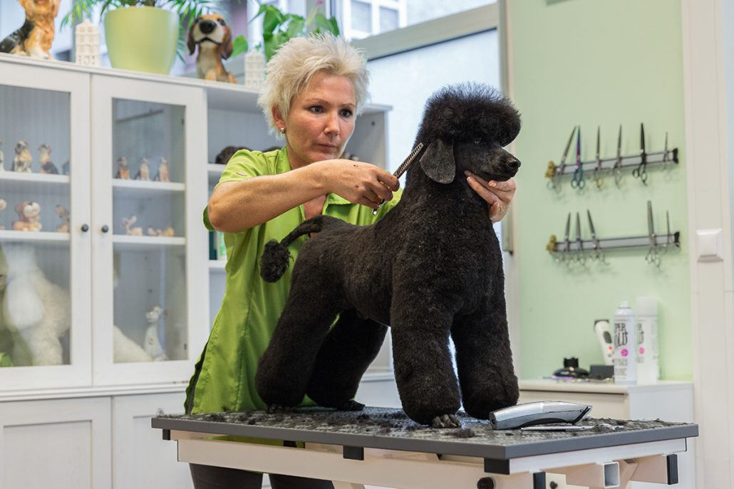 free online grooming courses