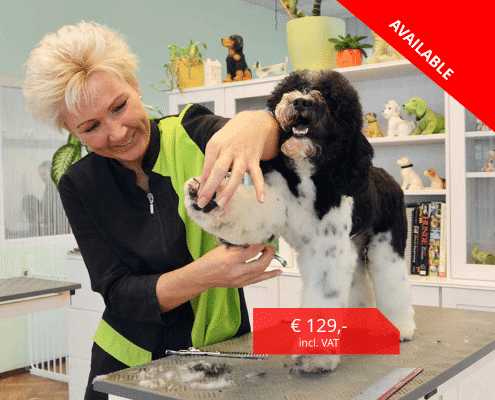 Online Dog Grooming Courses Happy Dog Groomers Eacademy